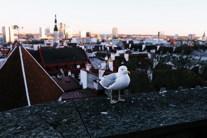 Tallinna (22)