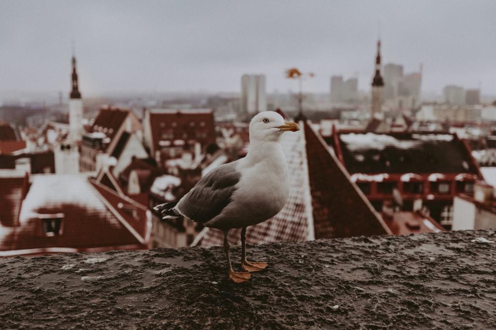 blogiTallink Europa (1)
