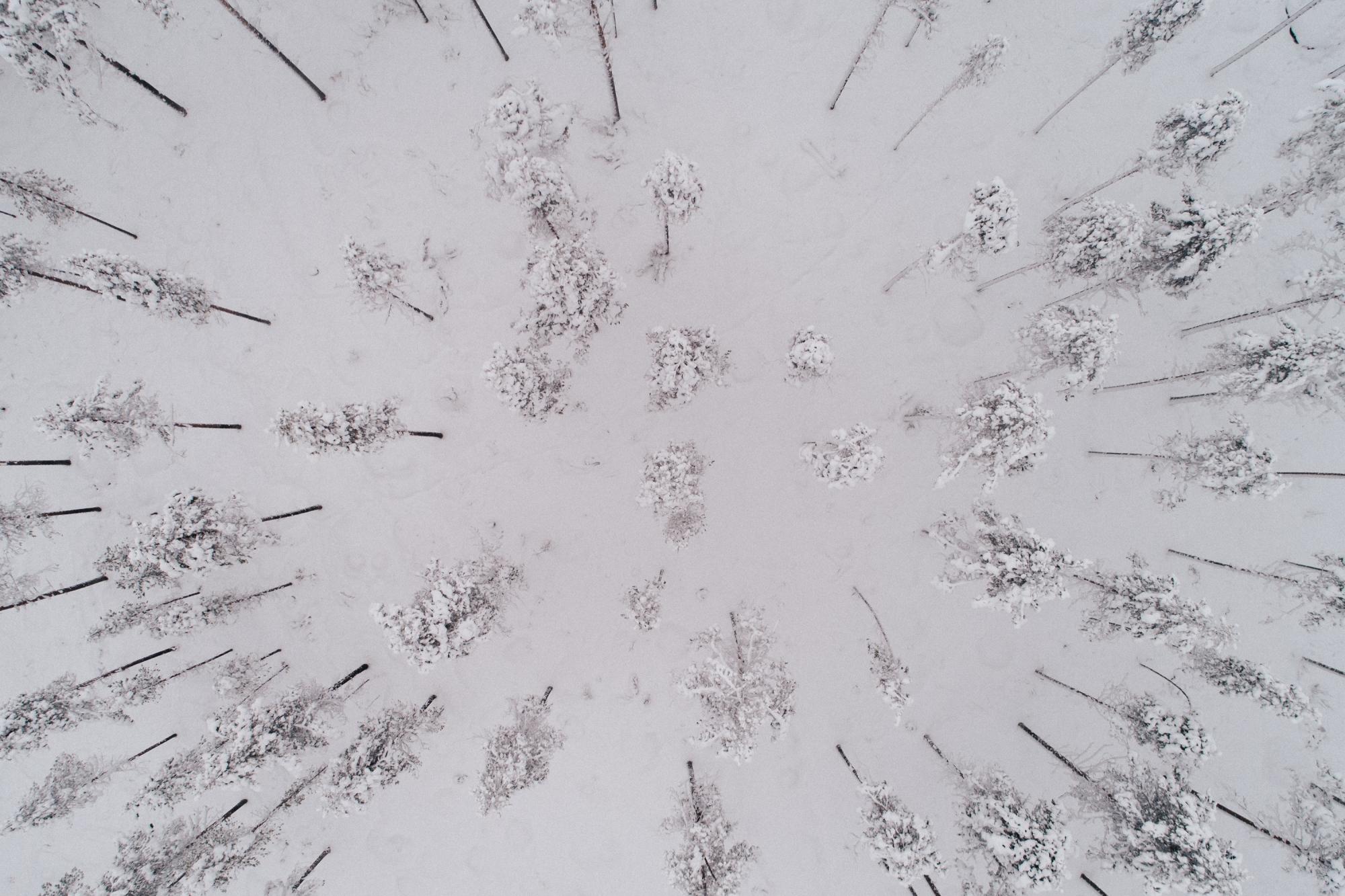 naaGKemijärvi4